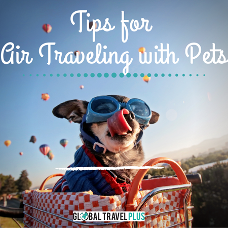 GTP-Airtravel-with-Pets.png